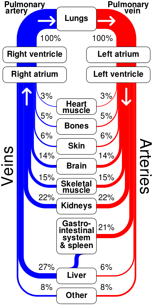 Sankey Diagrams Blog Archive Human Circulatory System Sankey